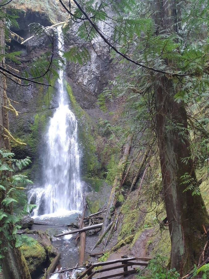 瀑布在温和过渡雨林里 免版税库存照片