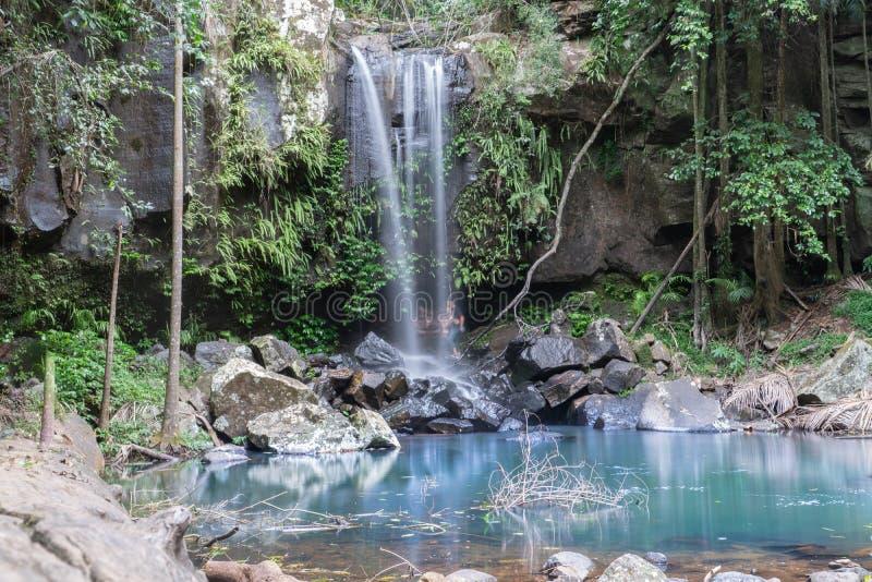 瀑布在登上Tamborine英属黄金海岸的, Queensla雨林里 库存图片