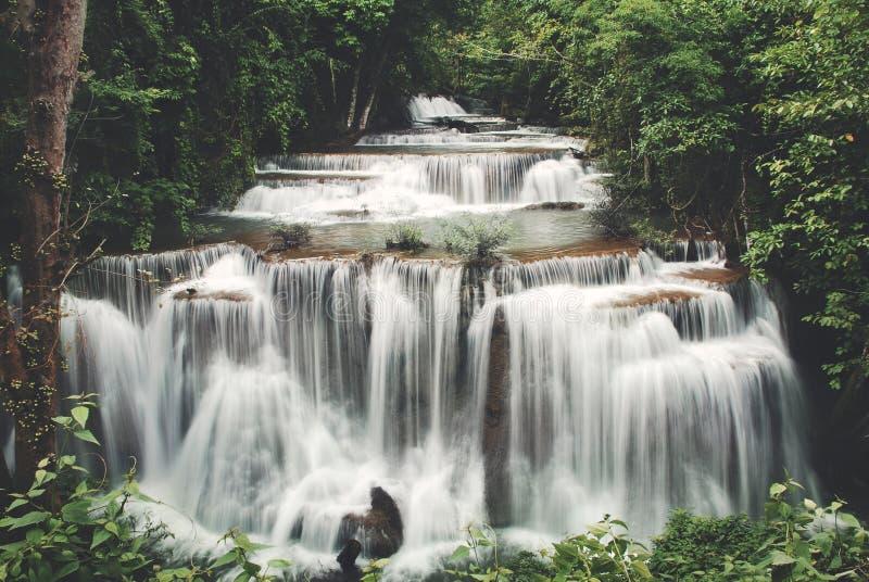 瀑布小瀑布生气勃勃密林自然概念 免版税库存图片
