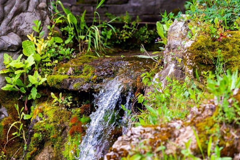 瀑布绿色森林河小河风景 免版税库存照片