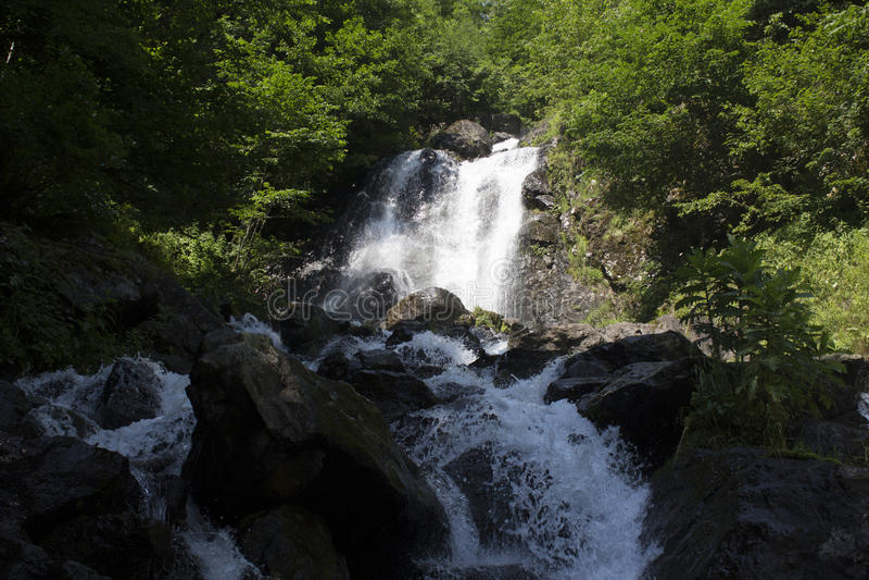 瀑布美丽的墙纸,放出快速的牛奶流程 阿布哈兹落矶山脉河在森林瀑布牛奶店 库存照片