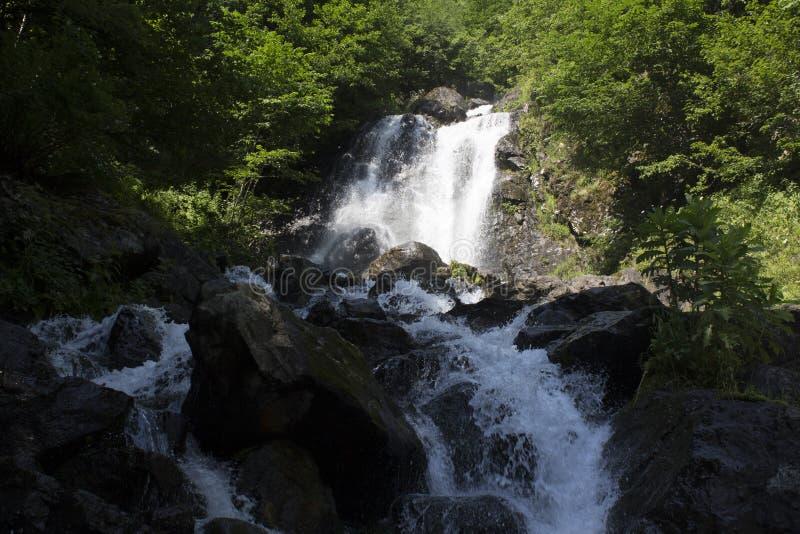 瀑布美丽的墙纸,放出快速的牛奶流程 阿布哈兹落矶山脉河在森林瀑布牛奶店 图库摄影