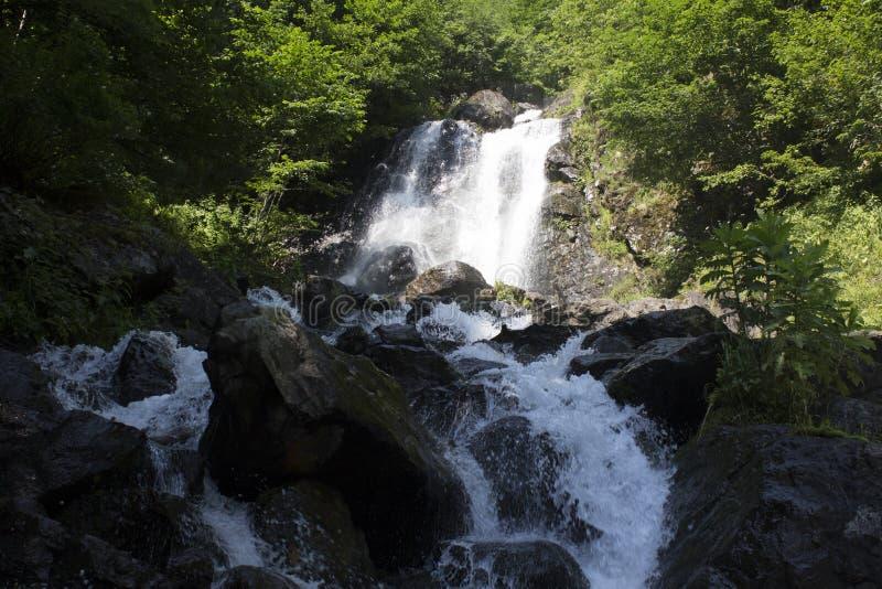 瀑布美丽的墙纸,放出快速的牛奶流程 阿布哈兹落矶山脉河在森林瀑布牛奶店 免版税图库摄影