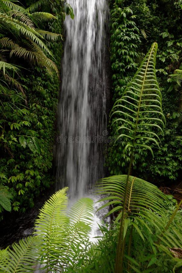 瀑布,印尼,巴厘岛 库存照片