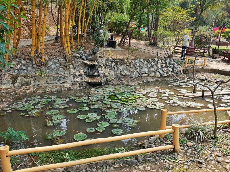 瀑布 莲花 植物群 动物区系 水 对它的最好的春天的自然和花 免版税图库摄影