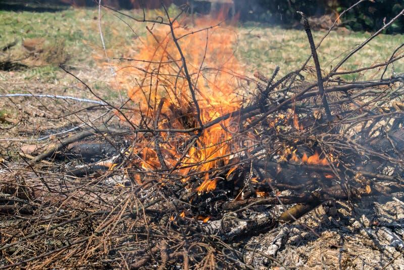 灌丛火在后院 免版税库存图片