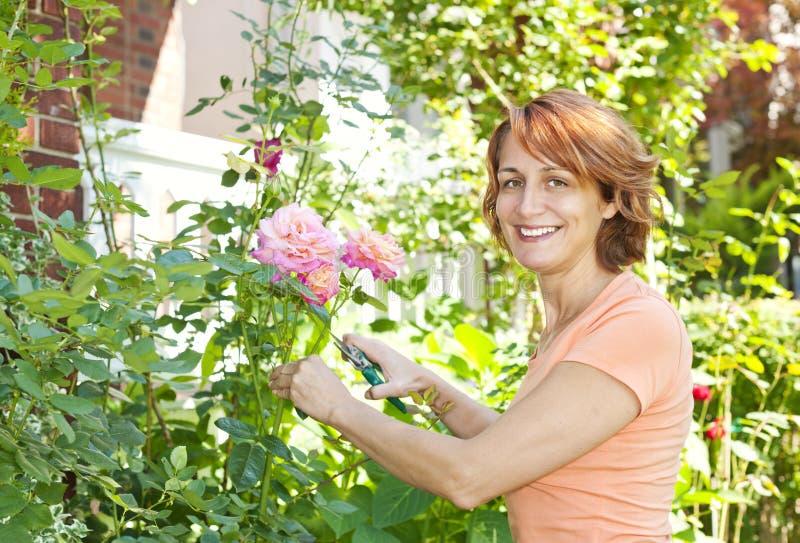 灌木修剪玫瑰色妇女 免版税库存图片