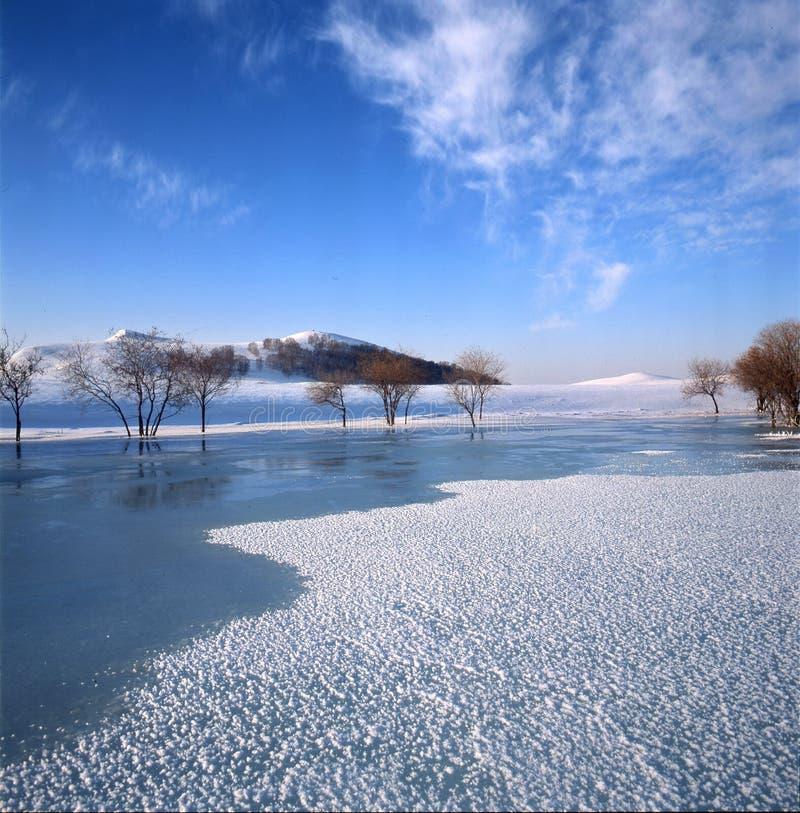 灌木冻结的河 库存照片