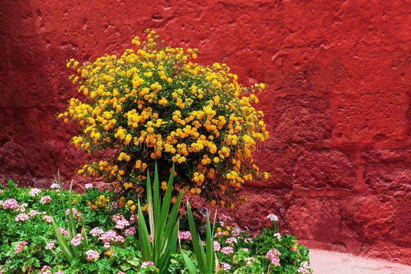 灌木开花黄色 库存图片