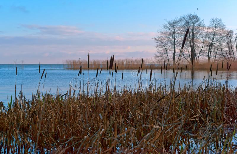 灌木的反射在水,沼泽地,水身体长满的银行中  免版税库存照片