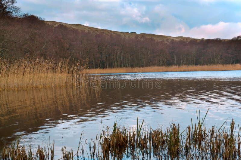 灌木的反射在水,沼泽地,水身体长满的银行中  免版税库存图片