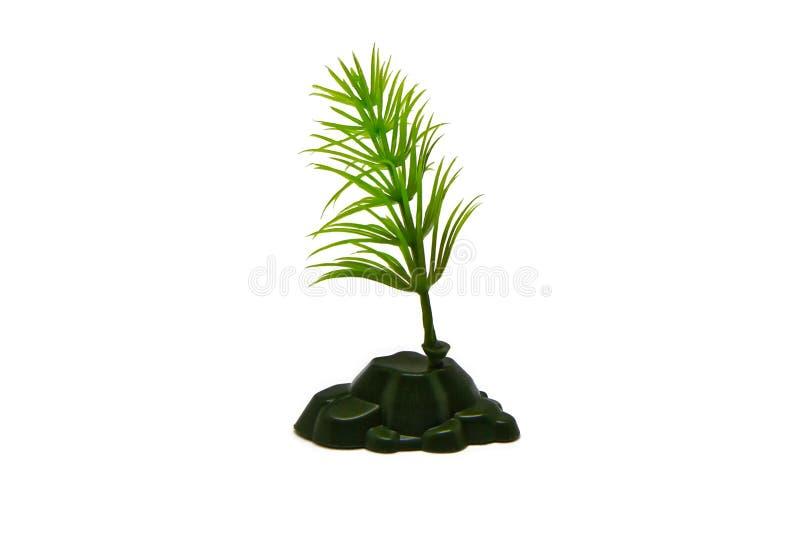 灌木纪念品 免版税图库摄影