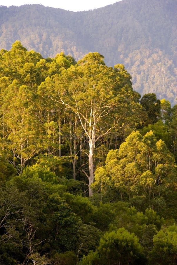 灌木胶山结构树 免版税库存照片