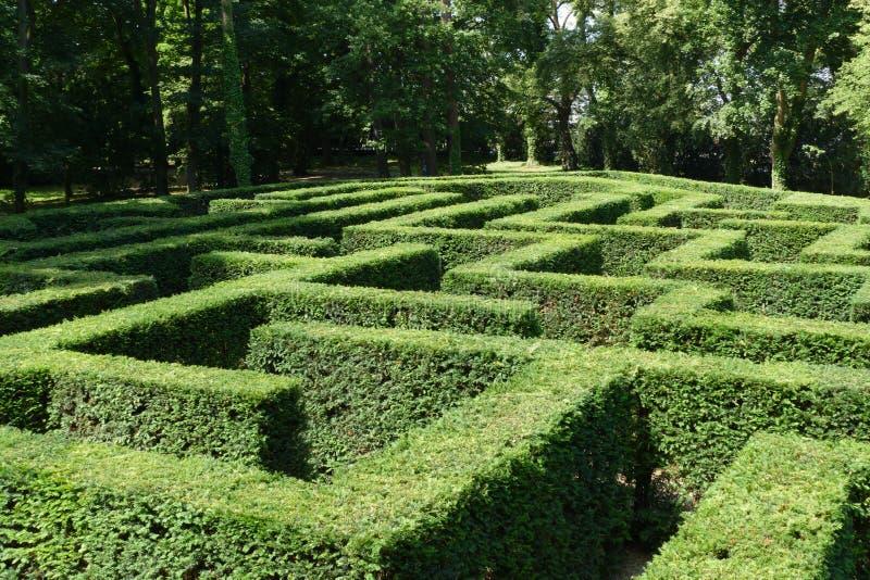 灌木迷宫 库存照片