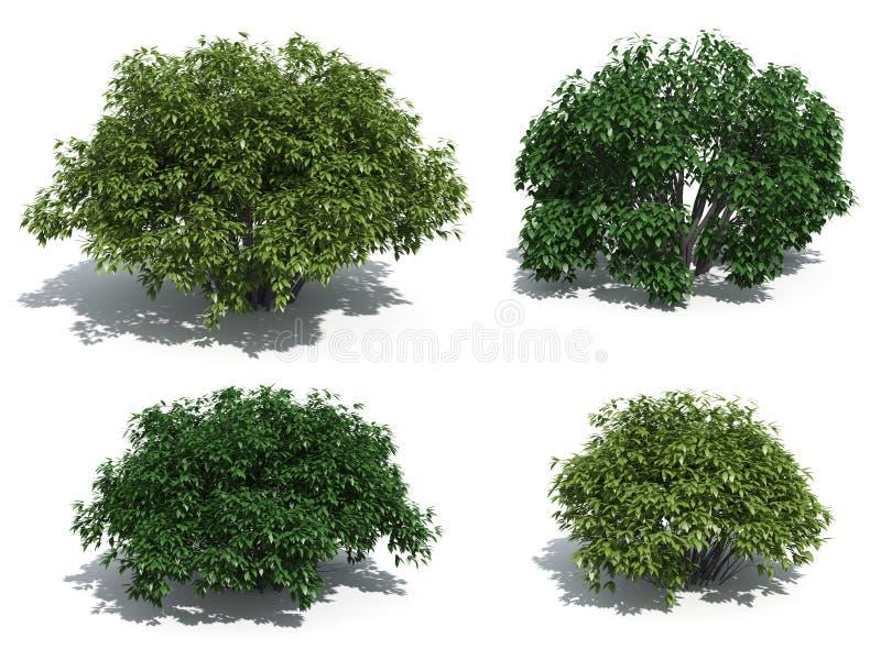 灌木 向量例证