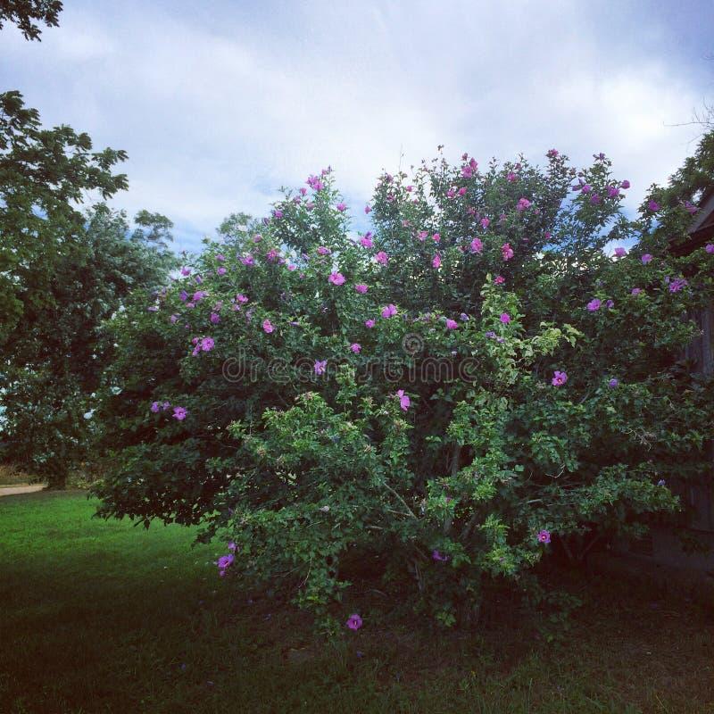 灌木 图库摄影
