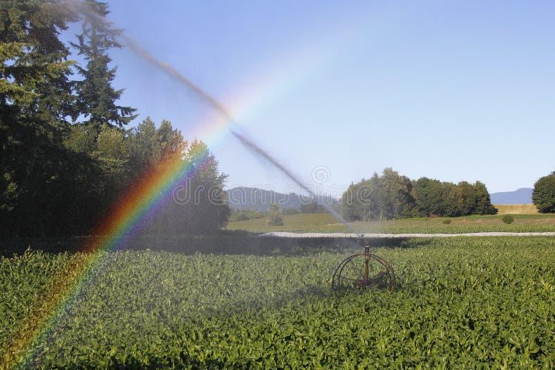 灌溉和彩虹 库存照片