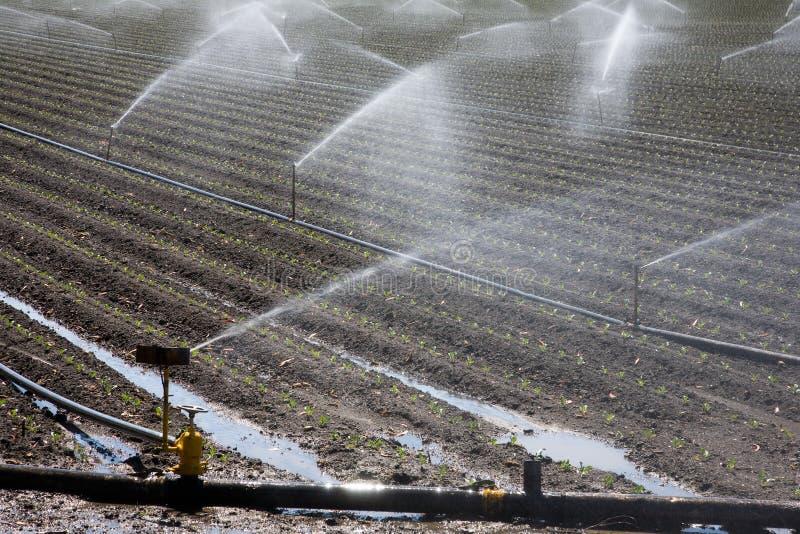 灌溉工厂 免版税库存图片