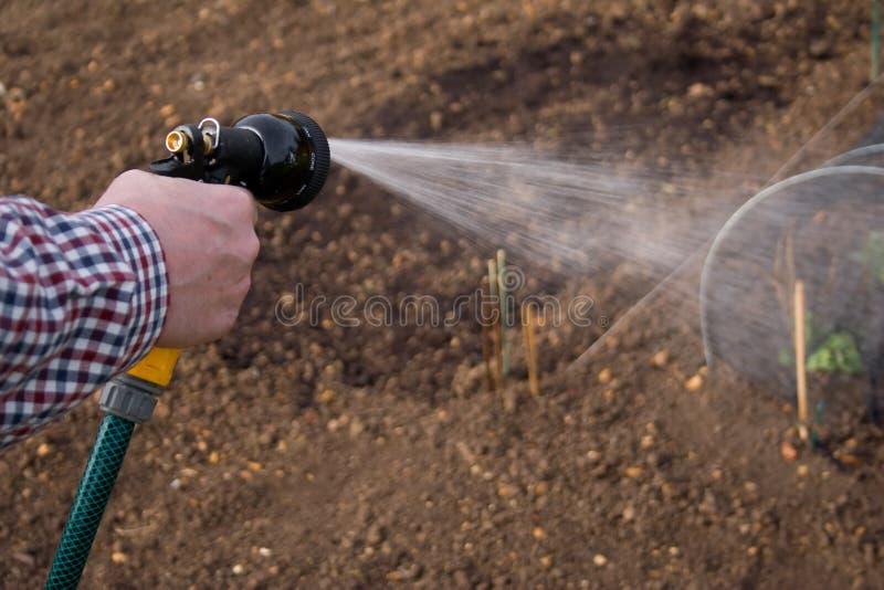灌溉的蔬菜 库存照片