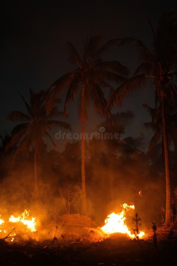 火和棕榈树在晚上 库存照片