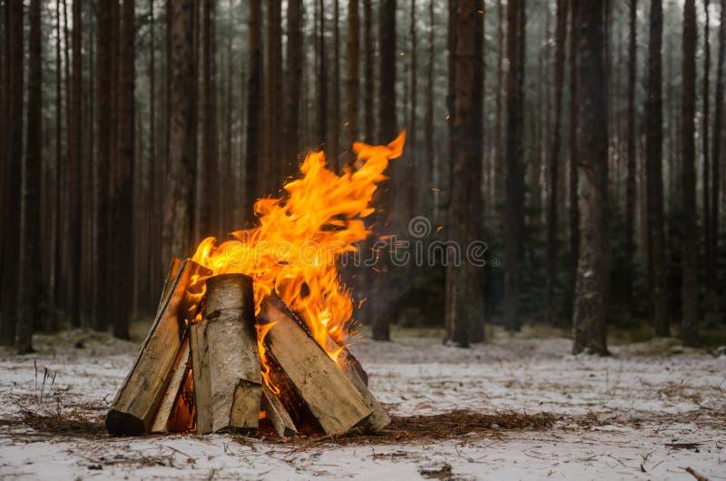 火在冬天森林里 图库摄影