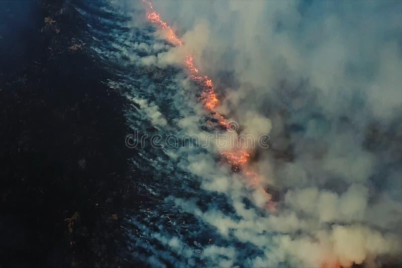 火在森林、灼烧的树和草里 自然火 免版税库存照片