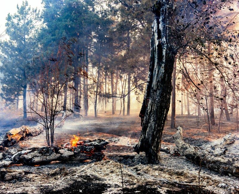 火在森林,树烧很多烟 免版税库存图片