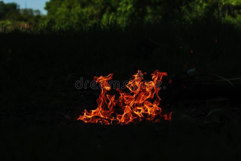 火在烤肉的晚上在森林 免版税库存照片