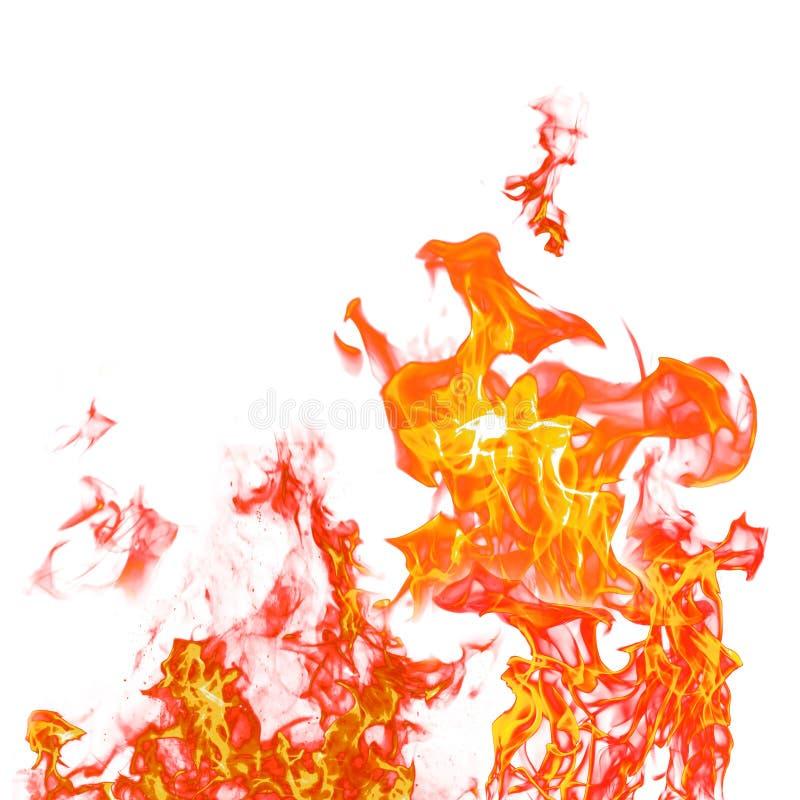 火在白色隔绝的火焰集合隔绝了美好的背景- 库存照片