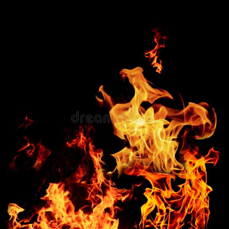 火在黑色隔绝的火焰集合隔绝了美好的背景- 库存图片
