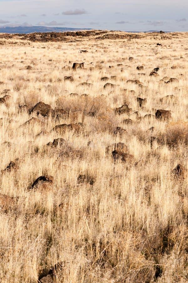 火山岩床国家历史文物岩石土墩草原北加州 免版税库存图片