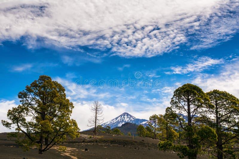 火山泰德峰的看法 令人惊讶的自然在泰德峰国立公园,特内里费岛,加那利群岛,西班牙 o : 库存照片