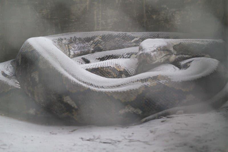 火山灰的火山爆发的影响的野生生物 库存照片