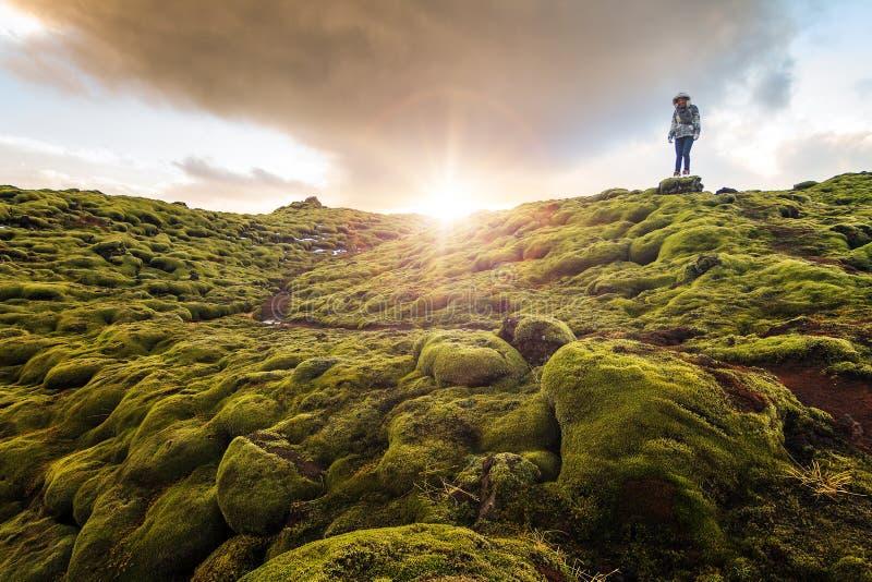 火山的青苔冰岛 免版税库存图片