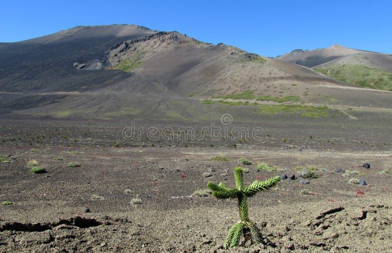 火山的风景在智利,研了用灰盖 免版税图库摄影