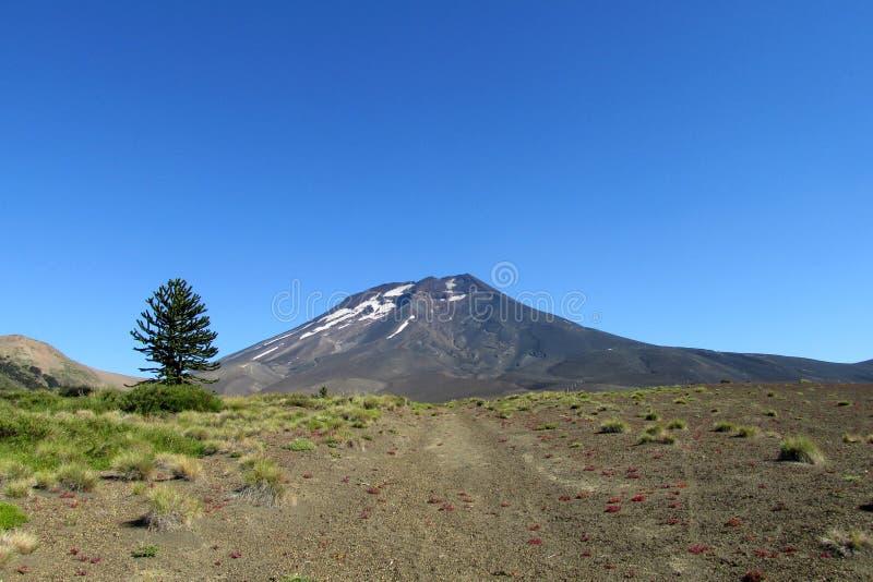 火山的风景在智利 免版税图库摄影