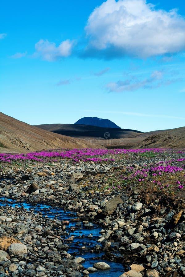 火山的高原的沙漠风景与明亮的花的 免版税库存图片