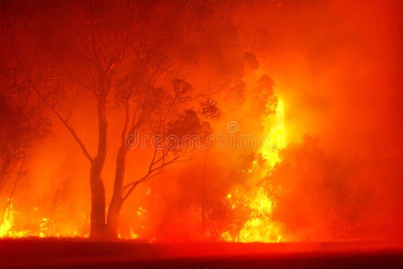 火森林晚上 免版税库存图片