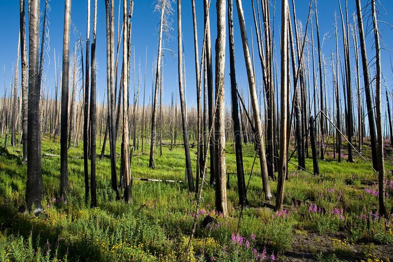 火森林重生 库存照片