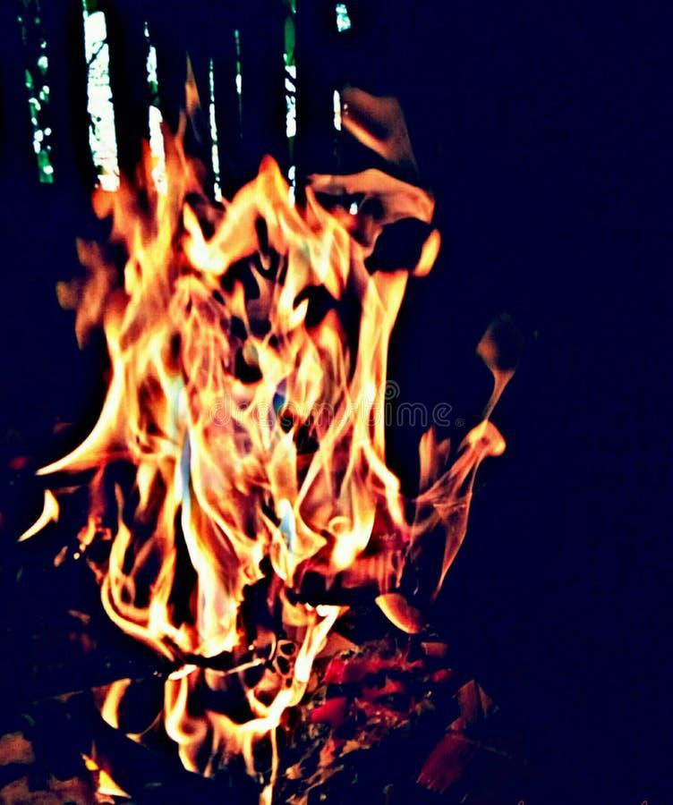 火热的高雅 库存图片