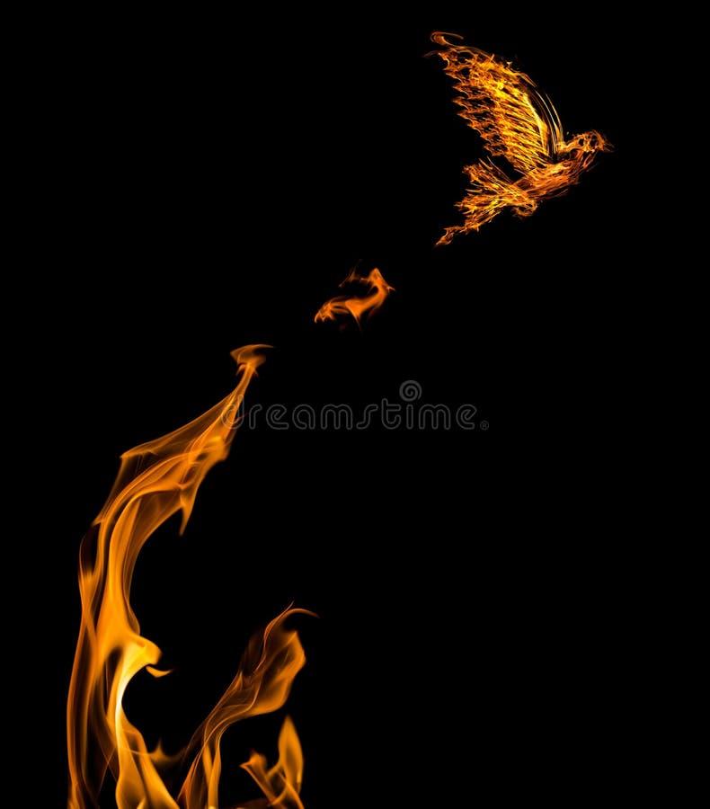 火焰从被隔绝的橙色flire的鸠飞行 图库摄影