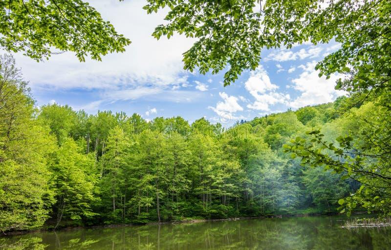 从火的烟在森林湖 免版税库存图片