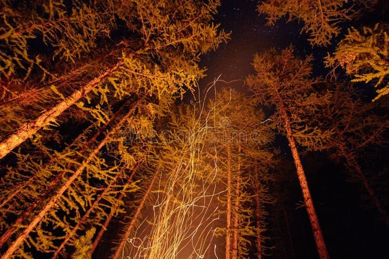 火花从篝火夜在飞行在天空的森林 火在森林在满天星斗的天空下,有启发性的树 库存照片