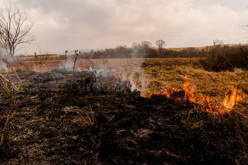 火领域 免版税库存照片
