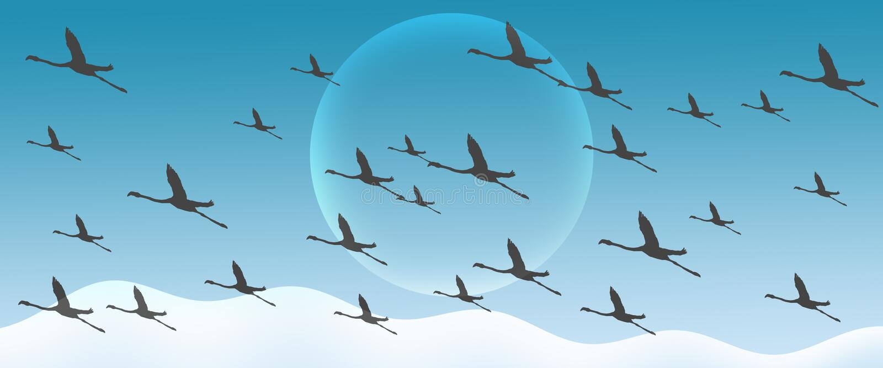 火鸟小组群在绿松石梯度倒栽跳水背景的剪影飞行 库存例证