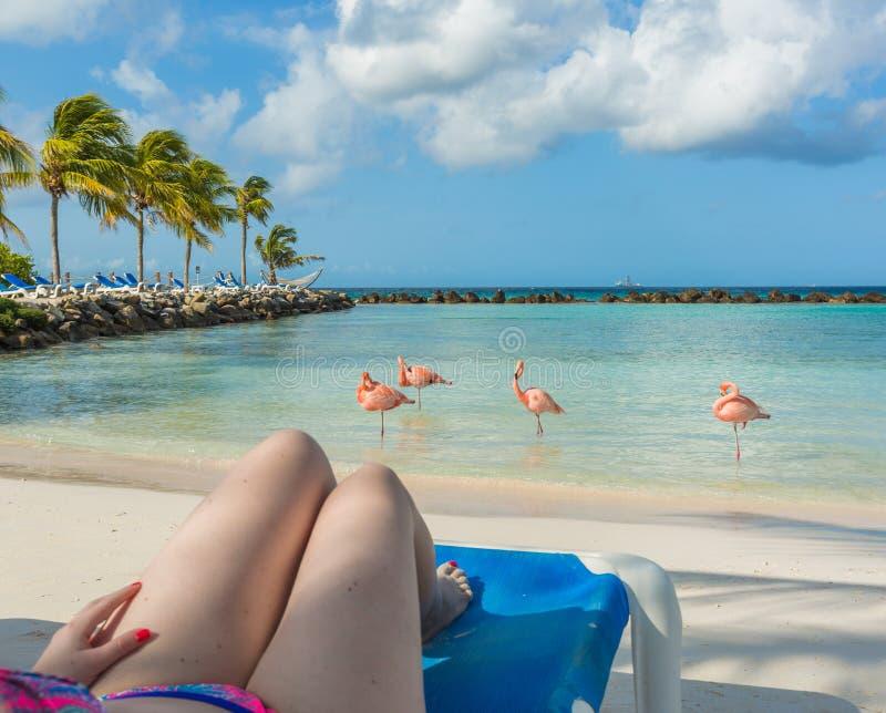 火鸟海滩在阿鲁巴 休息的妇女年轻人 库存照片