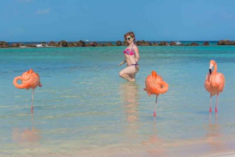 火鸟海滩 海芋属植物 图库摄影