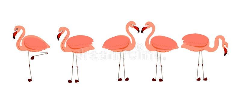 火鸟 异乎寻常的鸟传染媒介 套桃红色火鸟 异乎寻常的鸟用不同的姿势 皇族释放例证