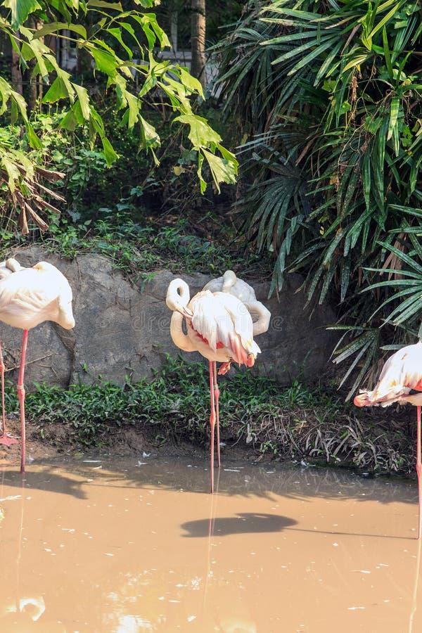 Download 火鸟 库存图片. 图片 包括有 长期, 图象, 橙色, 公园, 池塘, beautifuler, 大使, 食物 - 72368721