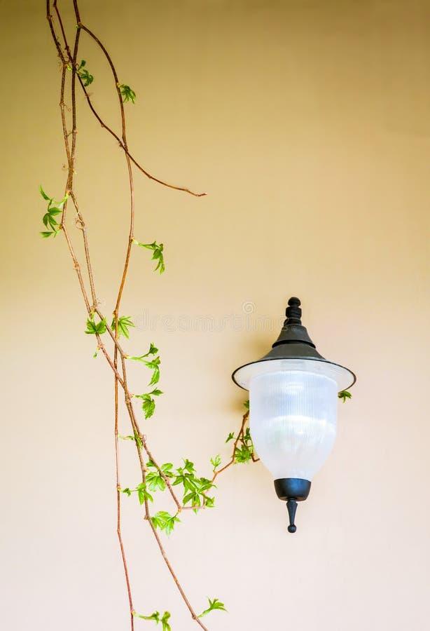 灯和常春藤在墙壁 库存图片